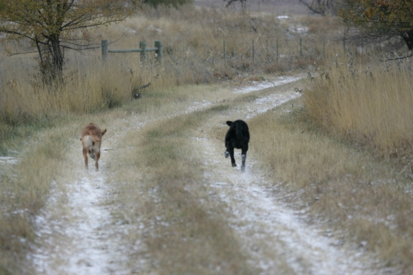 Tango & Ruby go for a romp